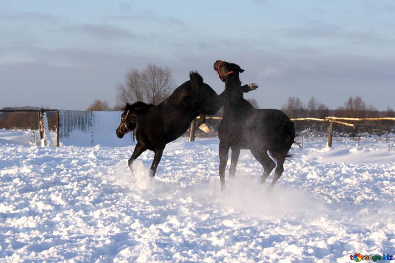 Horse kick №3959