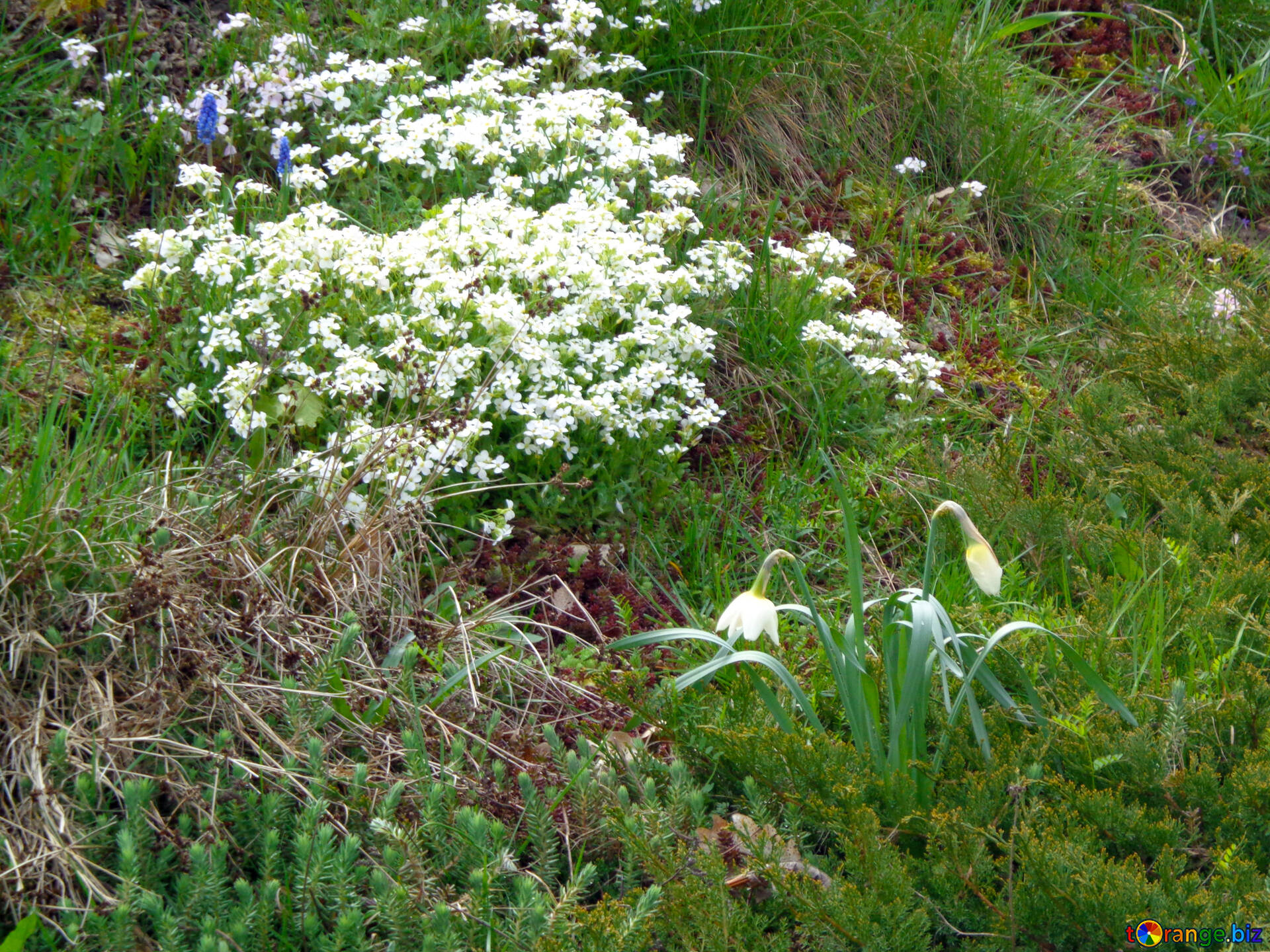 Flowers In The Flowerbed White Flowers On Floral Flowerbed Park 30369