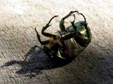 A beetle on its back №30780