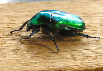 Glänzend grüne Käfer №30795
