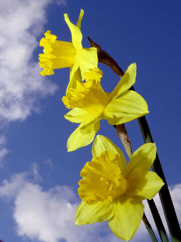 Spring bouquet №30957
