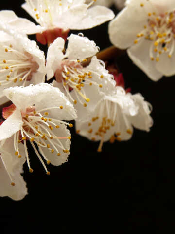 Macro di fioritura albero №30023
