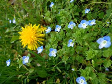 Flowering herbs №30393