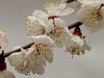 The tree flowers macro №30018