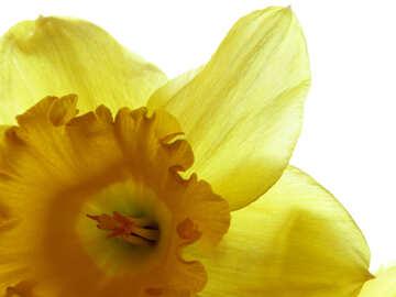 Background flower №30926