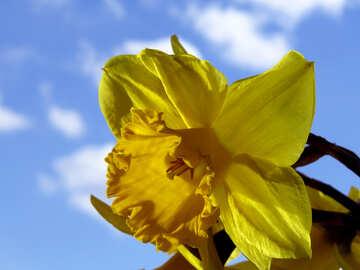 Solar flower №30911