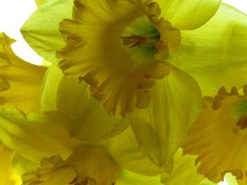 Yellow flowers №30924