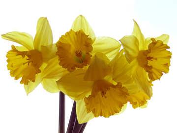 Yellow flowers №30934