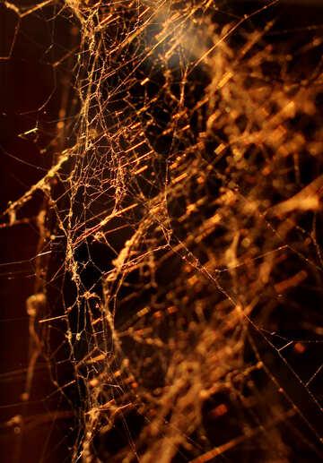 Spider Web №30966