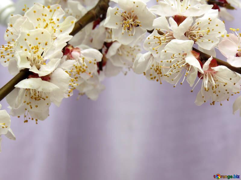 Весеннее цветение №30029