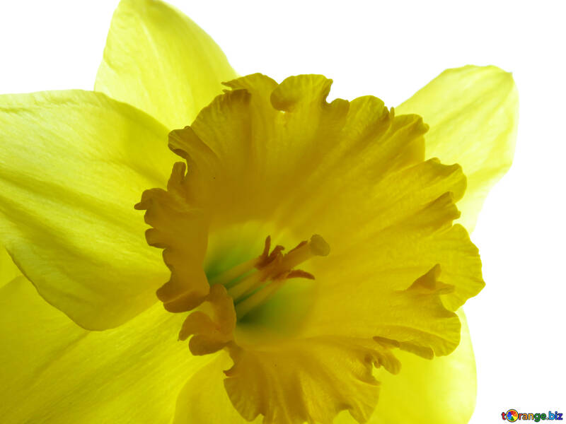 Background with yellow flower №30928