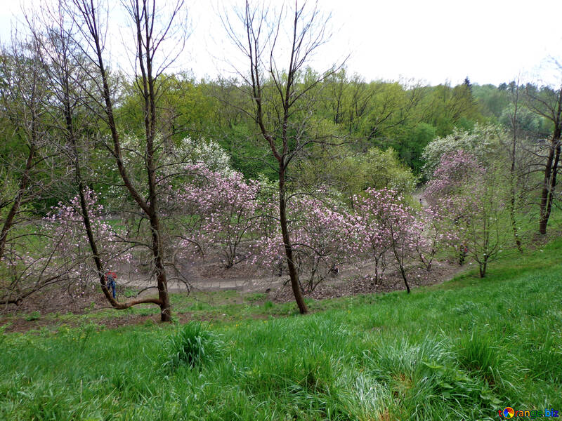 Magnolia Park №30390