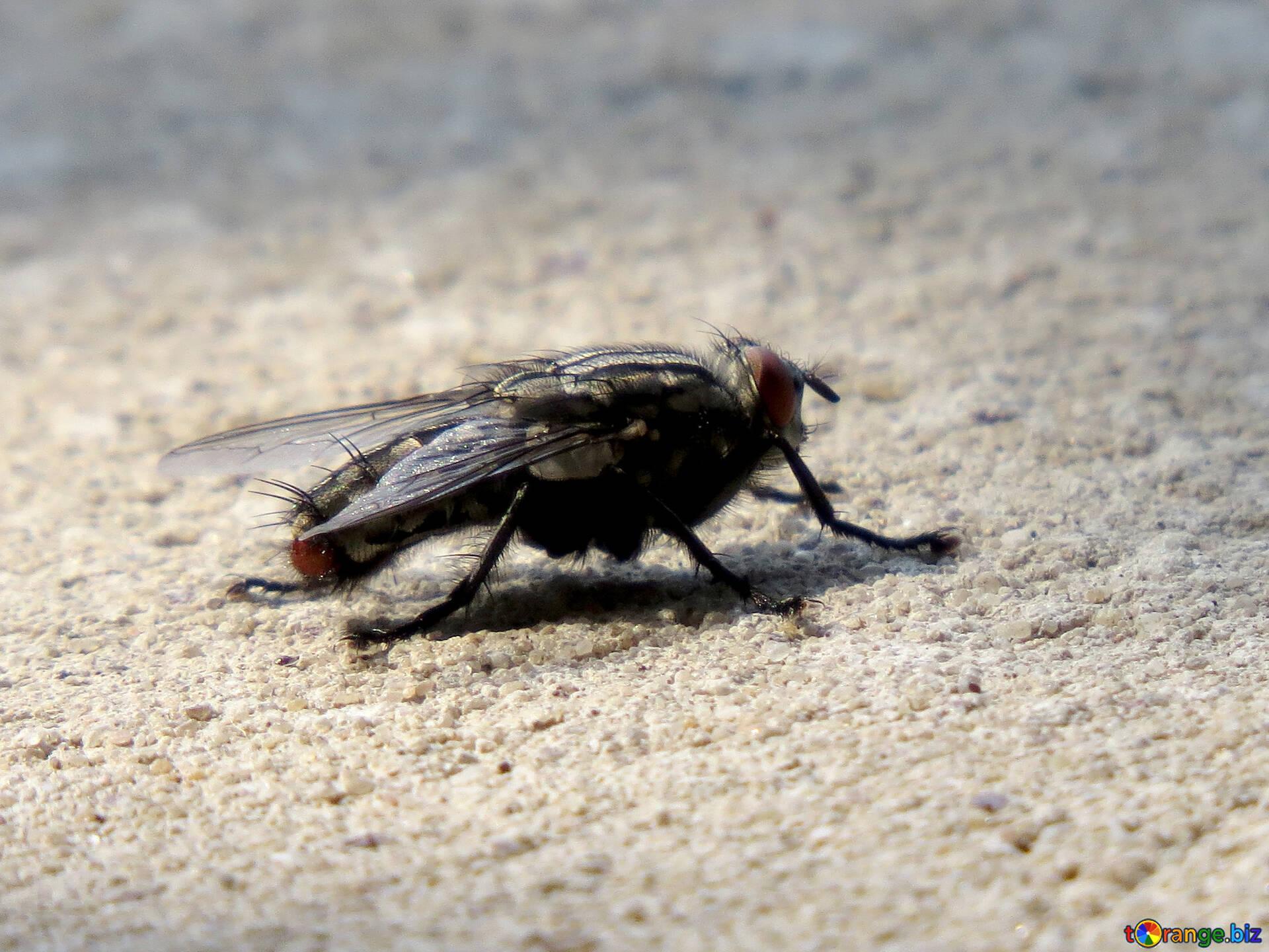 Картинки мухи на помойке
