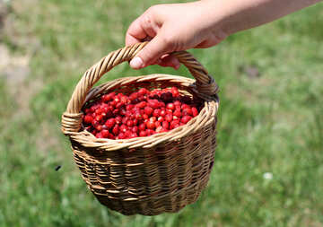Basket of strawberries №31485
