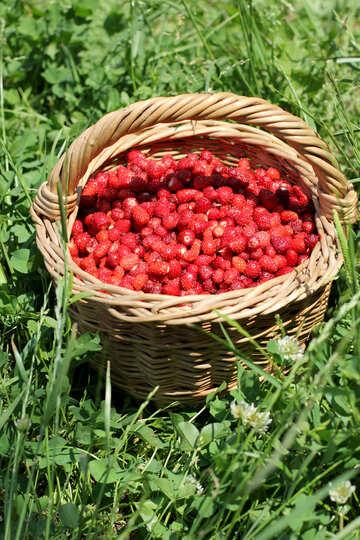 Wild strawberry №31479