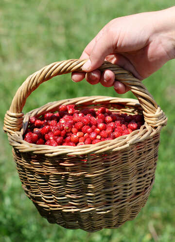 Wild strawberry №31486