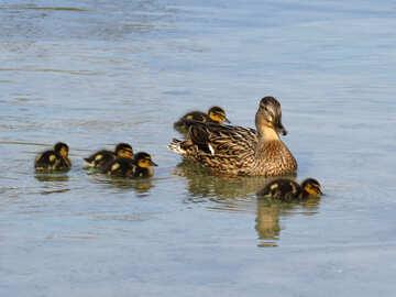 Duck Hunt №31371