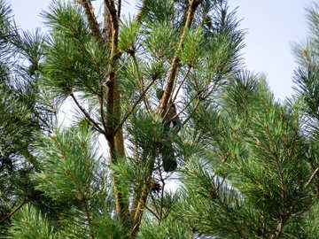 Birds are sitting on tree №31039