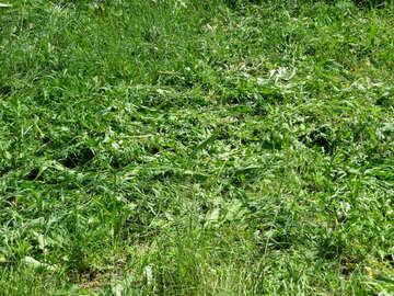 tall weeds №31437