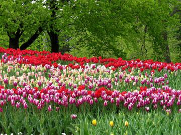 Flower garden №31236