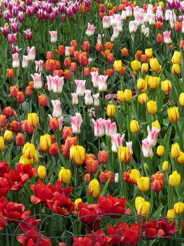 Flower show №31169