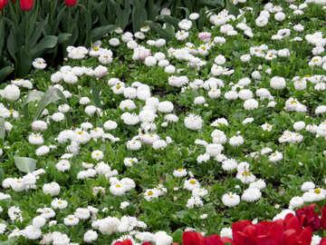 Floral flowerbed №31306