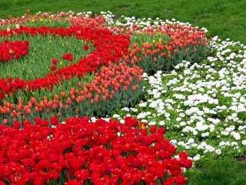 Dipinto di fiori №31302