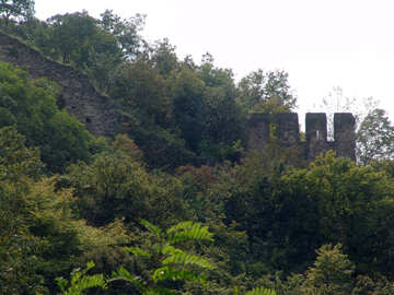 An ancient wall of overgrown in summer №31784
