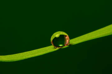 Dew drop on thin blade №31114