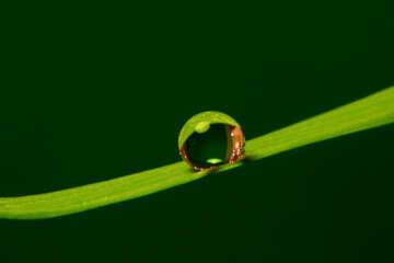 Gota de rocío en lámina delgada №31114