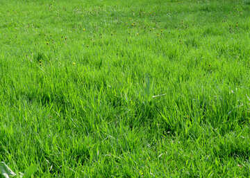 Lawn №31127