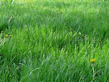 Green grass №31129