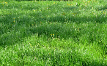 Green Lawn №31130