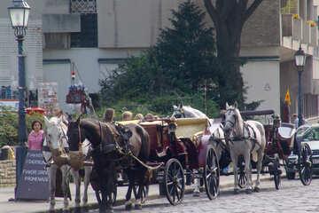 Horse carts №31969