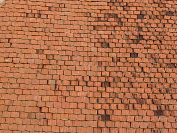 The texture of the old shingles №31761