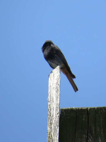 A little bird №31650