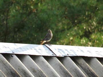 Un uccello sul tetto №31643