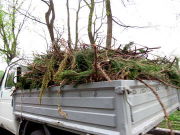 Removal of cut branches №31339