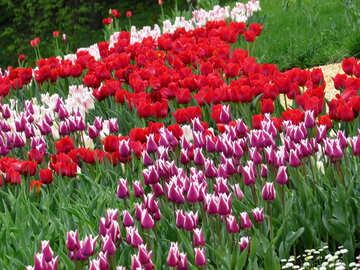 Assorted tulips №31256