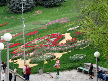 Exhibition of tulips №31315