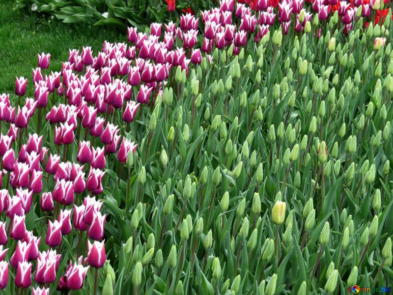 Fleurs De Jardin Dessin Fleurs Parc 31296
