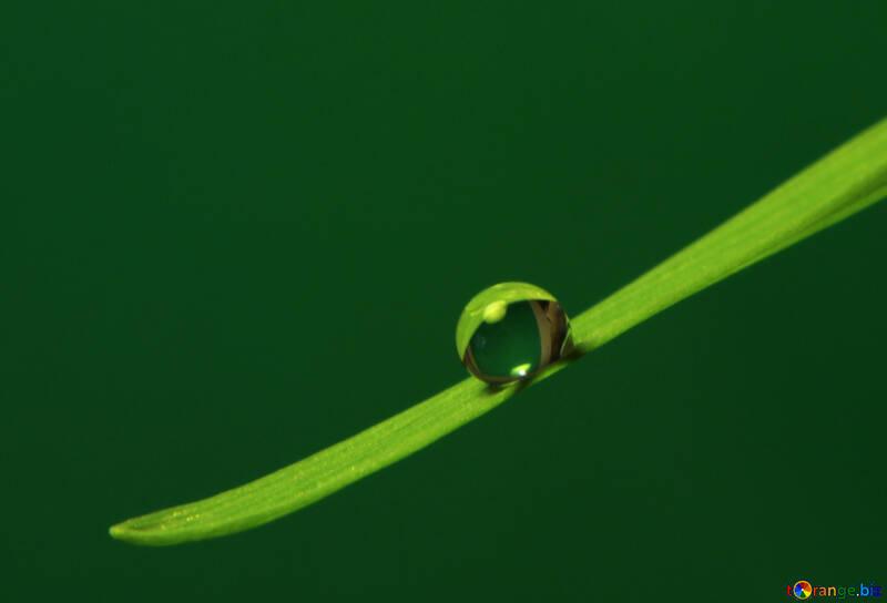 Une goutte d`eau sur l`herbe №31112