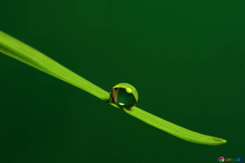 Une goutte d`eau sur l`herbe №31113