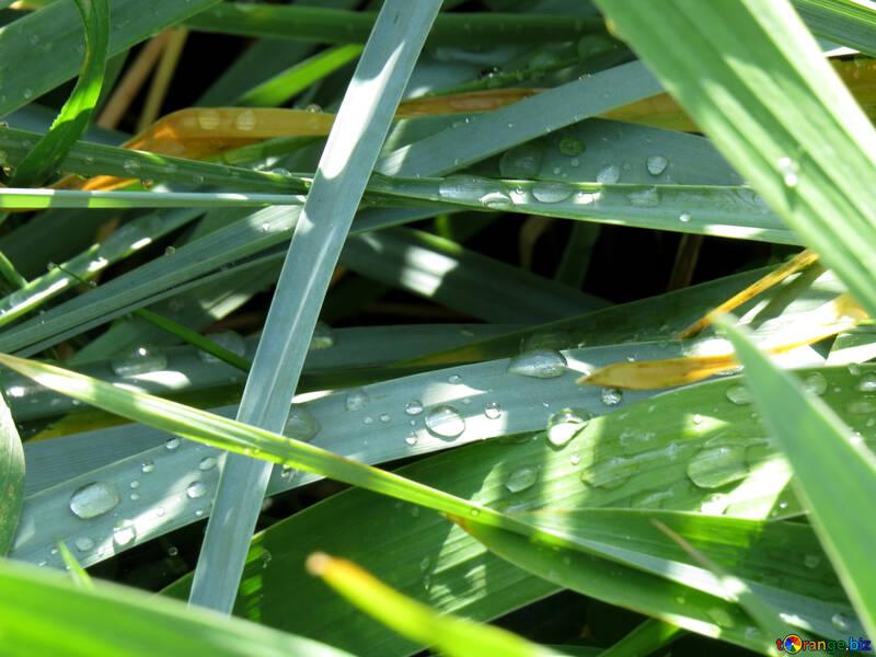 Les gouttelettes d`eau dans l`herbe №31434