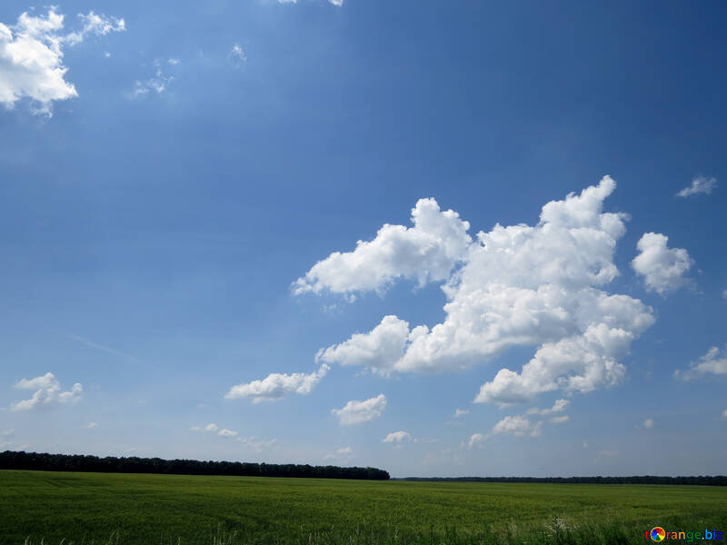 Beautiful sky on green grass №31591