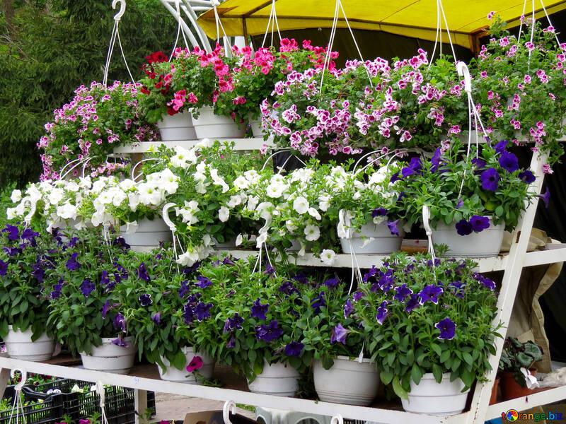 Business-Verkauf von Blumen №31341