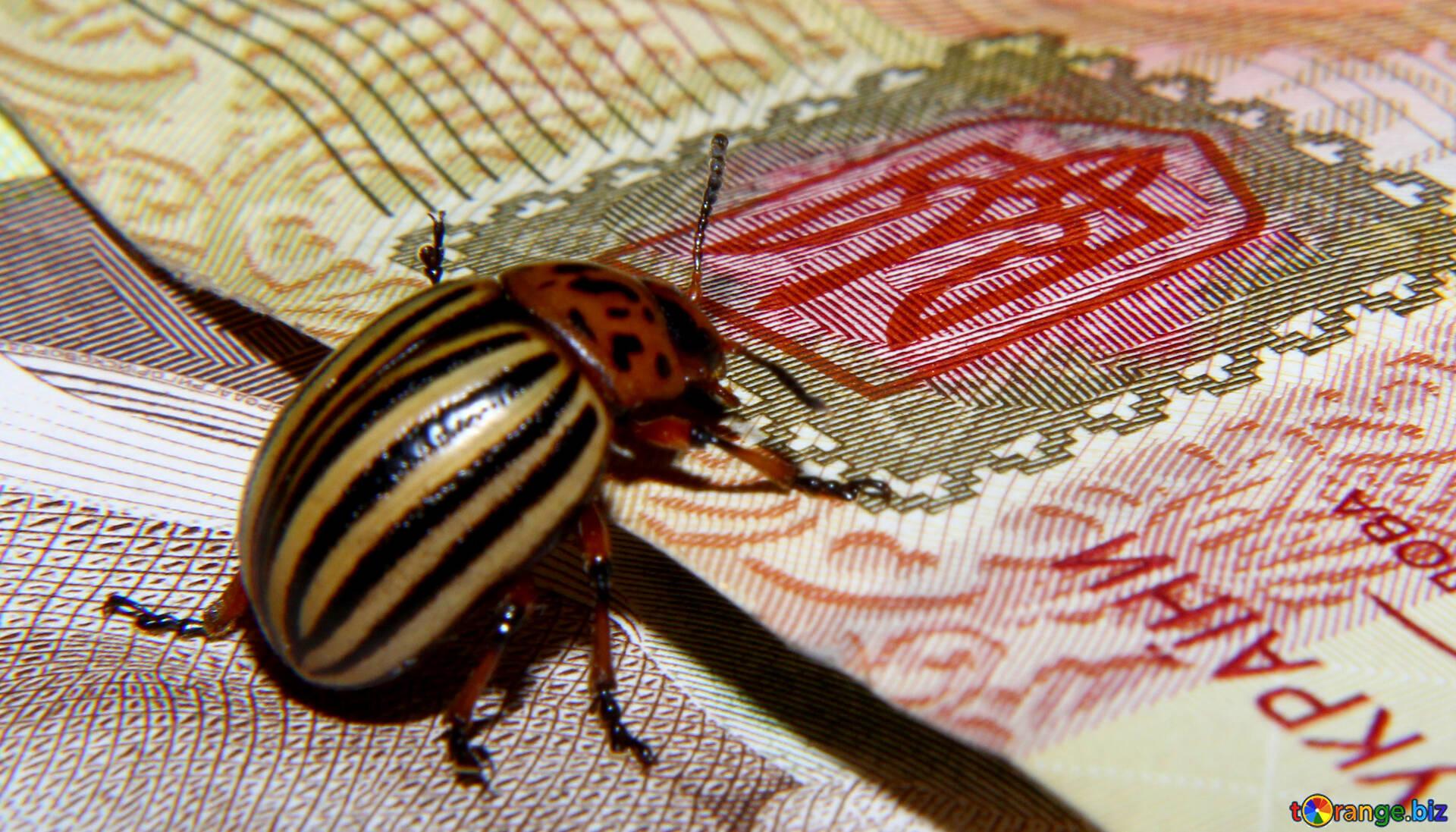 Колорадский жук смешная картинка