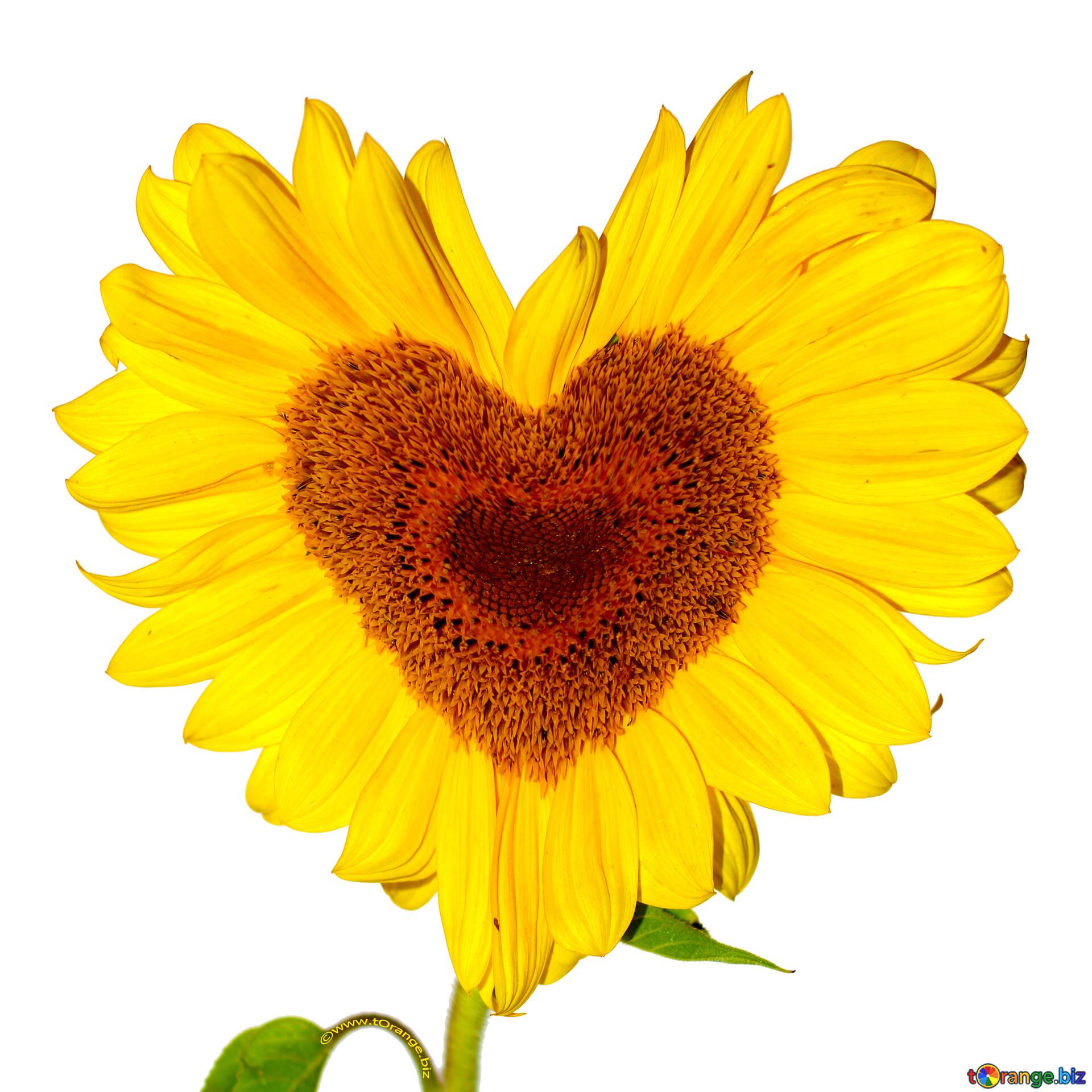 Milieux Coeurs Forme De Coeur De Fleur Cœur 32673