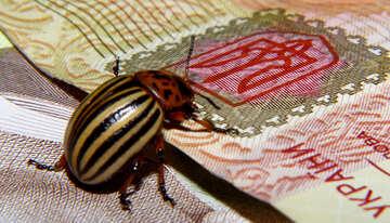 Colorado potato beetle and trident №32133