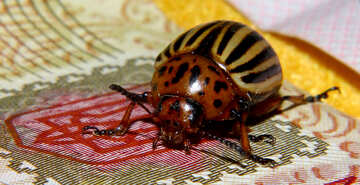 Colorado potato beetle on the coat of arms of Ukraine №32135